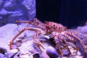 Eine Reise in die Unterwasserwelt