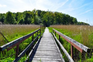 Wandern in der Rostocker Heide