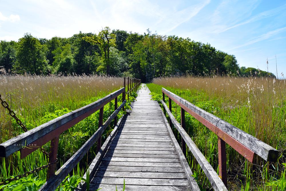 Rostocker Heide